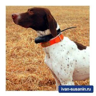 Garmin Astro 220 - навигатор с системой слежения за охотничьими собаками